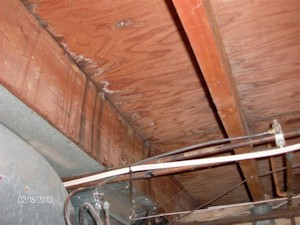 Mold Remediation Removal Catco Inc Construction
